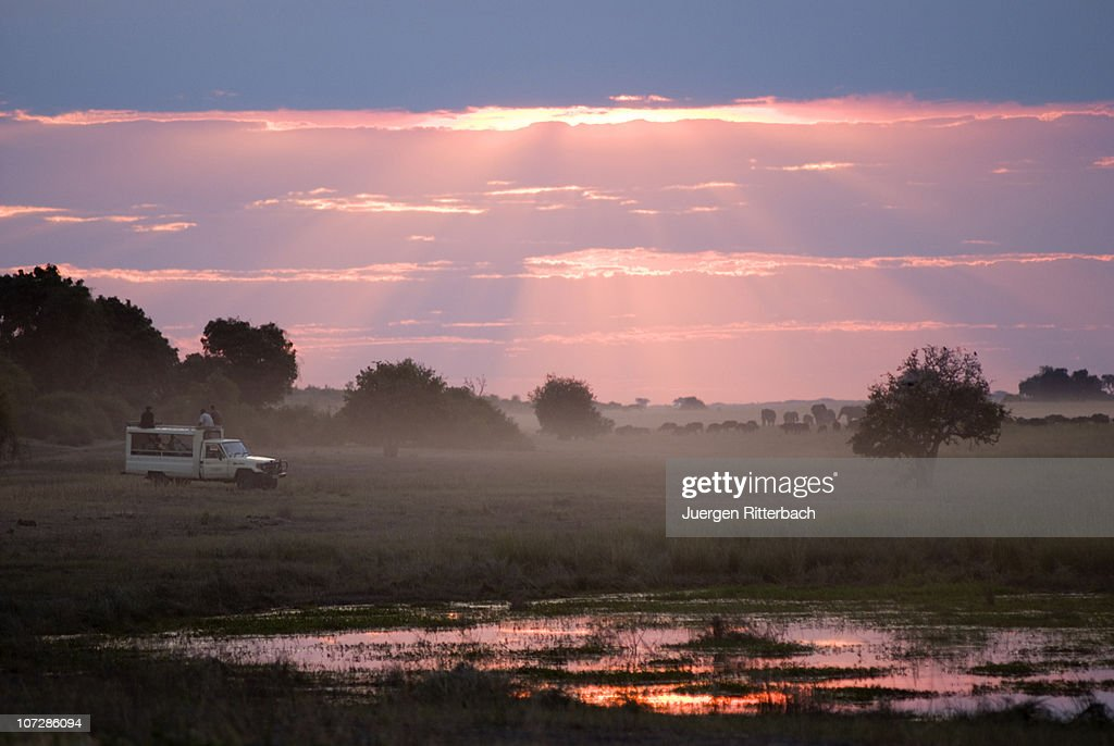 sunset at  Chobe riverfront, animals in front : Stock Photo