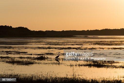 Sunset at Myakka river State Park Florida