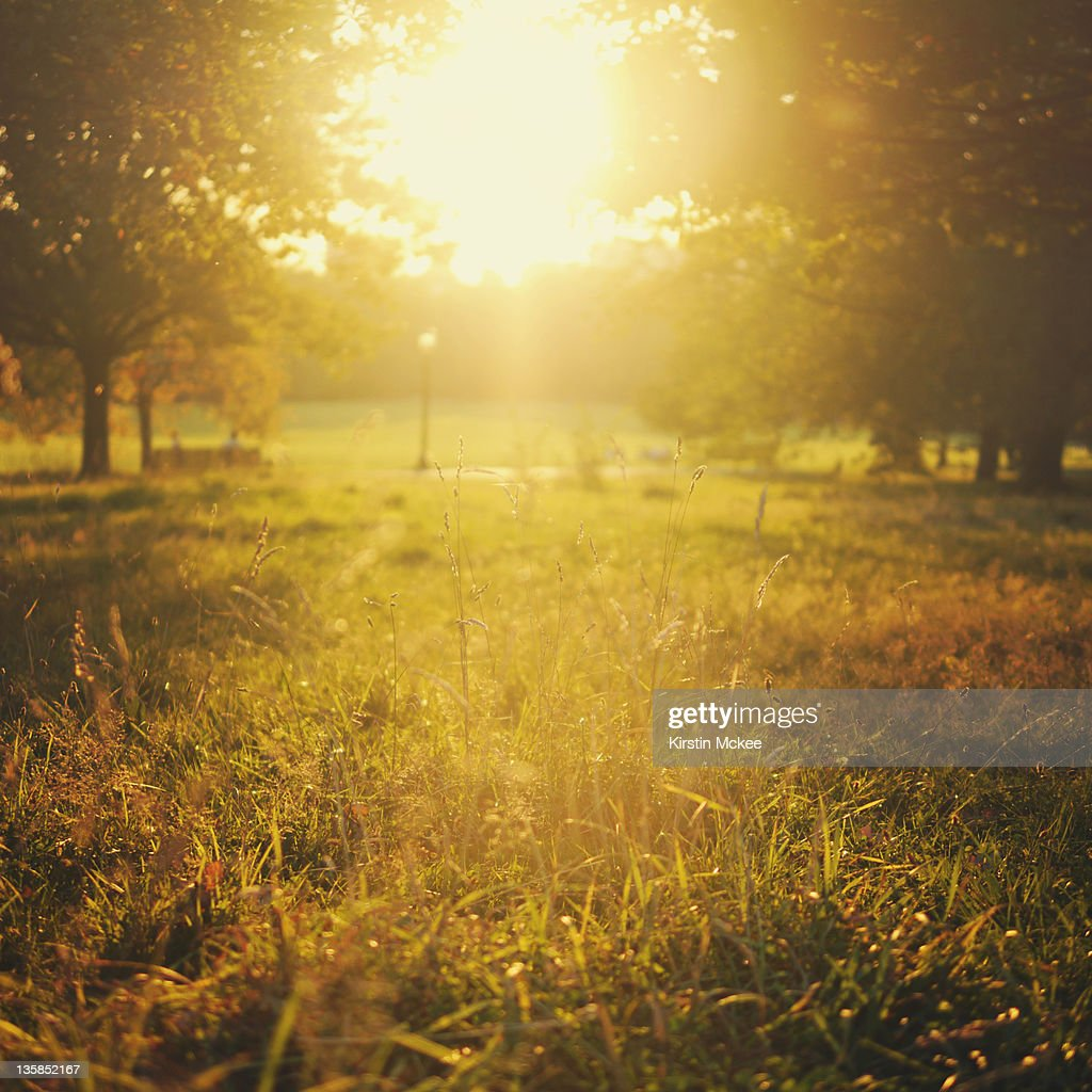 Sunset at Primrose hill : Stock Photo