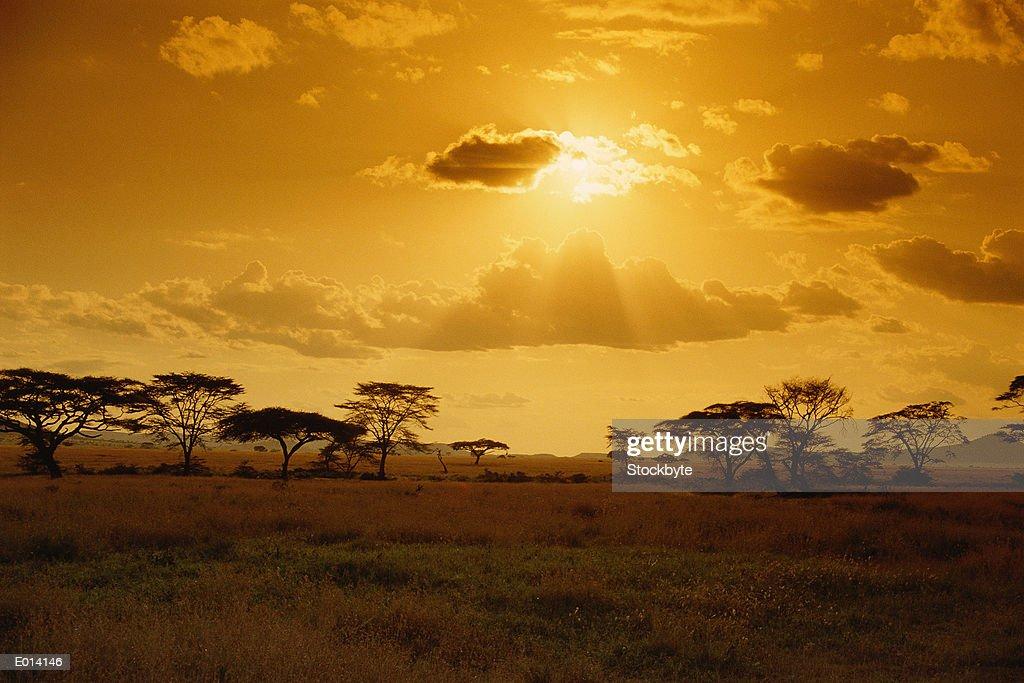 Sunset at Serengeti Plains, Tanzania : Stock Photo