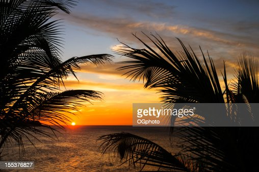 Sunset at the beach framed by palm leaves