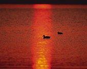Sunset at the Lake, High Angle View, Pan Focus
