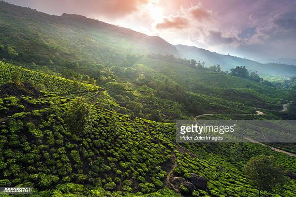 Sunset at the tea plantations of Munnar