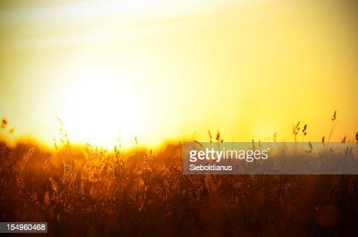 Fond de coucher de soleil sur la prairie d'été.