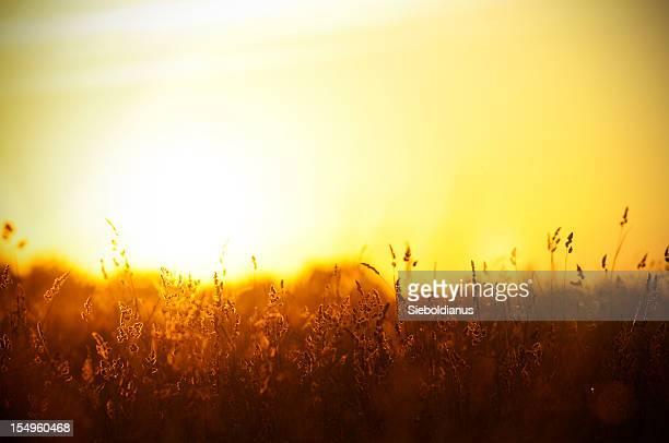 夕日を背景に、サマー meadow ます。