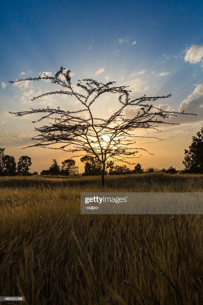 Sfondo di tramonto : Foto stock