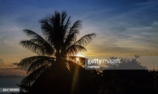 Sunset behind a palm : Stock Photo