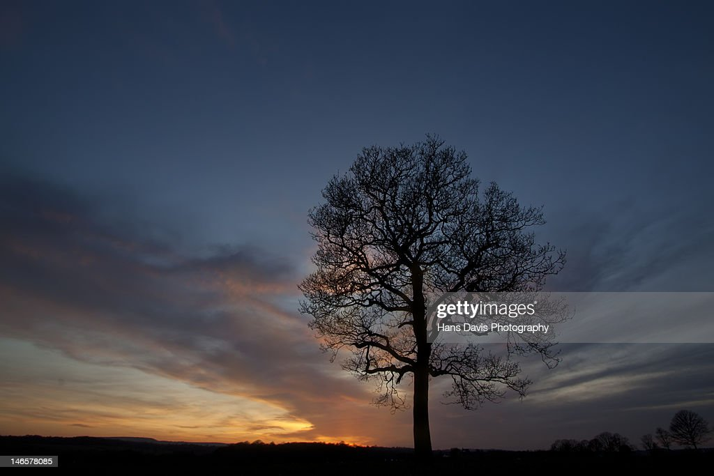 Sunset behind tree in silhouette in field : Stock Photo