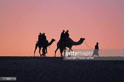 Sunset Camel Ride in Rajasthan