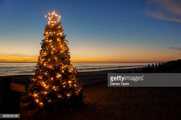 Sunset Christmas Tree