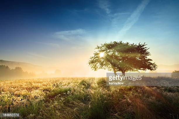 Pôr do sol Paisagem com nevoeiroweather forecast-sol a brilhar através da árvore