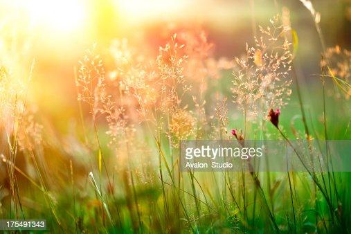 サンセットの草原