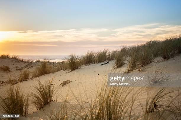 Sunset illuminate sand dune and sea grass