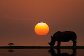 Low Key of Image Rhinoceros on Sunset in Africa