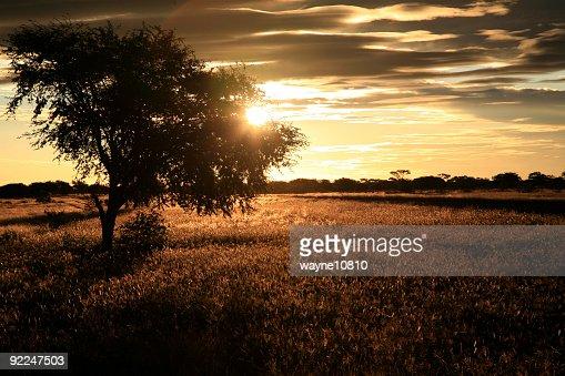 ボツワナで夕日