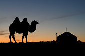 """Silhouette of a camel with ger (Yurt) at Gobi desert, Mongolia during sunset"""