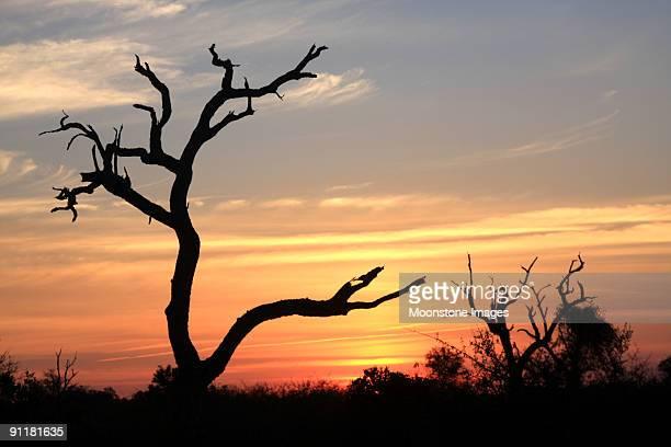 Coucher de soleil au parc National Kruger, Afrique du Sud
