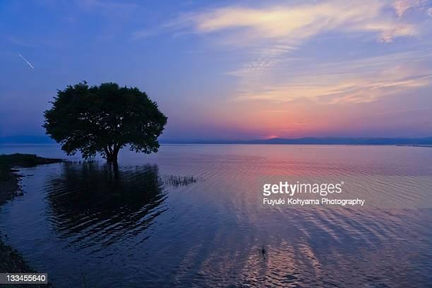 Sunset in Lake Biwa , One tree in Lake Biwa