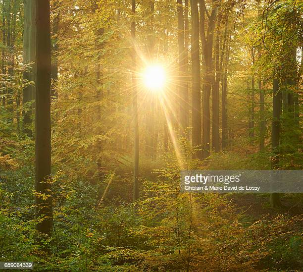 Sunset in Sonian Forest, Brussels, Belgium