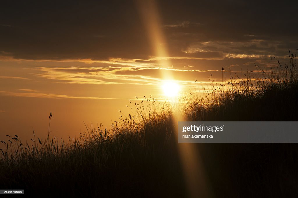 Sunset in the fileds : Stock Photo