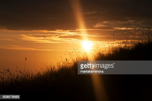 Sunset in the fileds : Stockfoto