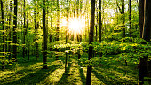 Beautiful forest at springtime with bright sun