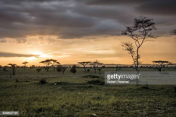 Sunset in the Serengeti