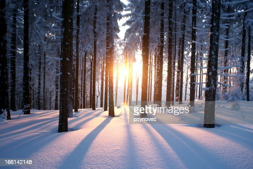 Sunset in winter period : Stock Photo