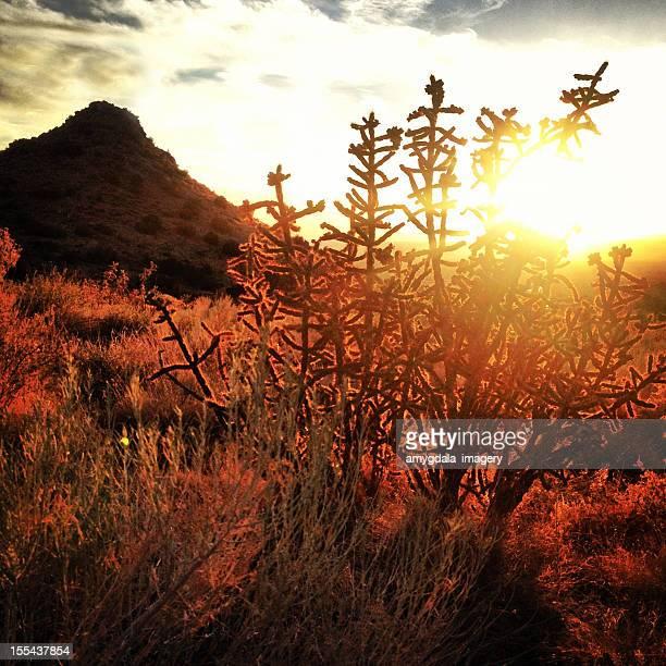 sunset landscape desert