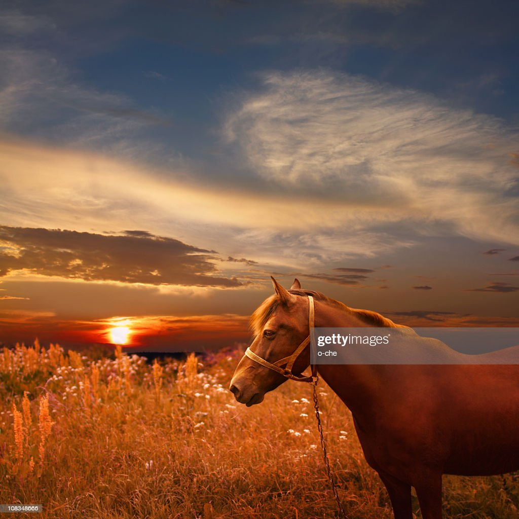 Sunset landscape with chestnut horse : Stock Photo