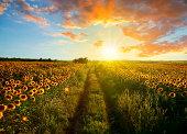 Sunset Landscape - XXXL