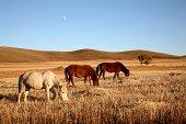 Sunset of Bashang-Inner Mongolia Autumn Scenery