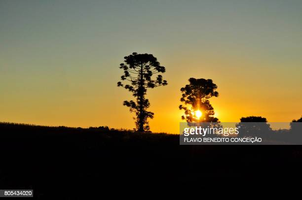 Sunset on agriculture farms in the region of Londrina in Brazil