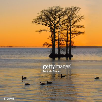 Sunset on albemarle cound cypress trees : Stock Photo