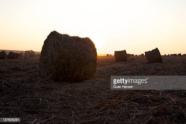 Sunset on bales of leaves left over from the sugar cane harvest, Big Bend, Swaziland, Southern Africa