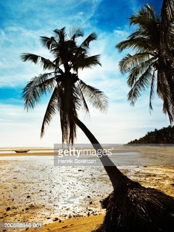 Sunset on beach with palms : Stock Photo