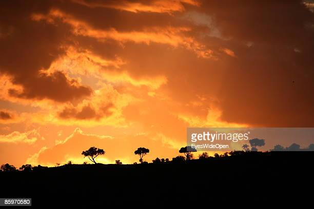 Sunset on March 20 2009 in Masai Mara National Park Nairobi Kenya Named of the local ethnic group massai its a nature reseve north of the serengeti...