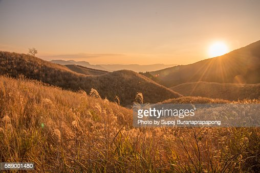 Sunset on the grassy meadow