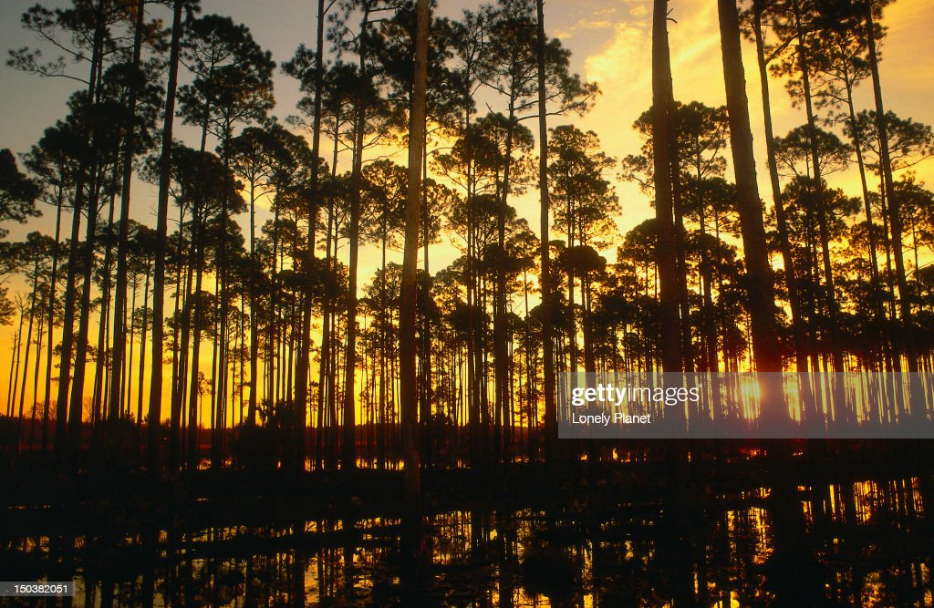 Sunset on the road from Tallahassee - Wakulla Springs State Park, Florida