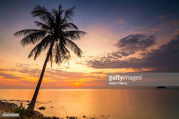 Sunset on the shore of a tropical island with palm