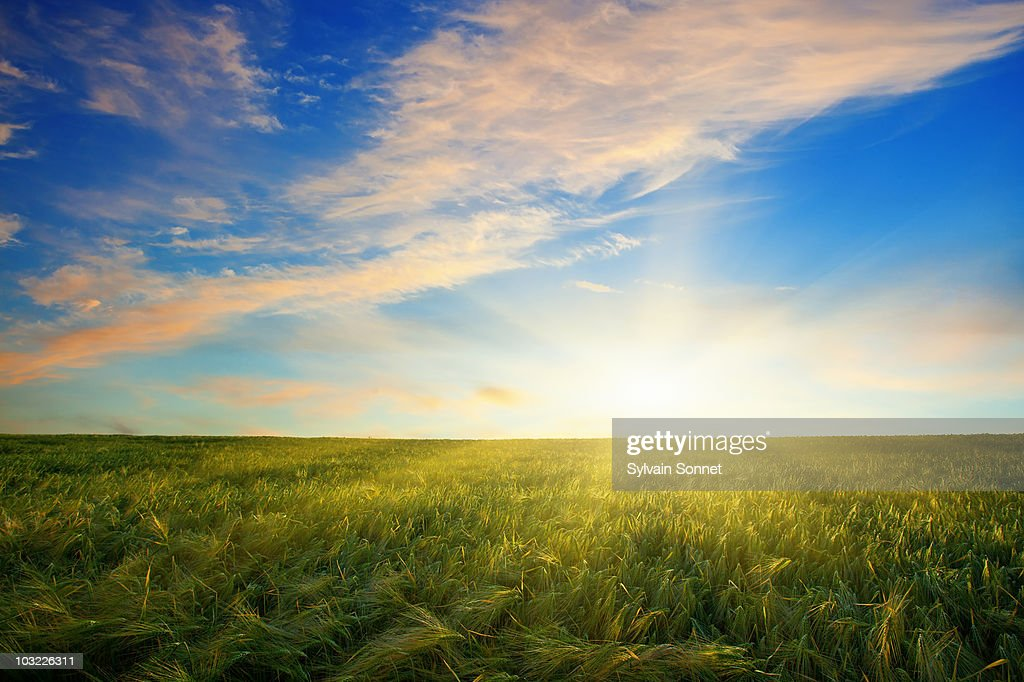 Sunset over a field : Stock Photo