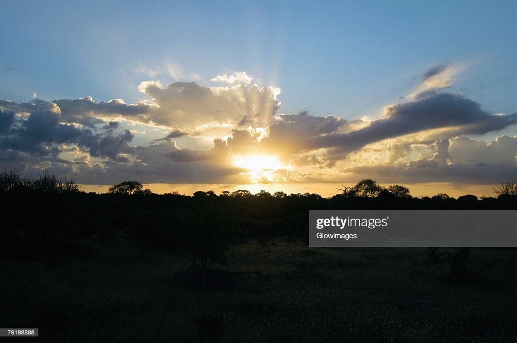 Sunset over a forest, South Africa : Stock Photo