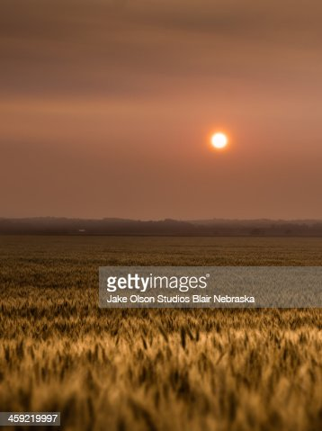 Sunset over a wheat field 2 : Stock Photo
