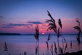 Purple skies over a Dorset harbour and reeds on the shoreline