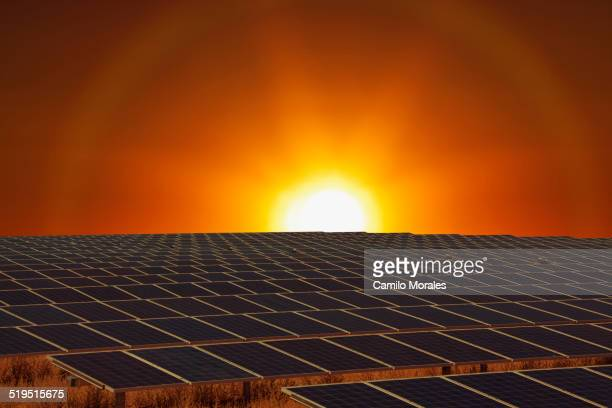 Sunset over field of solar panels