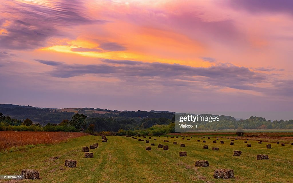 Sunset over  field with a lot of bales of hay : Stock Photo
