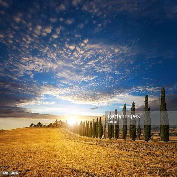 Sunset over golden field and alley of cypress in Tuscany