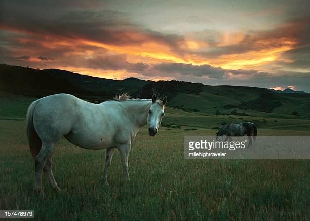 Pôr do sol sobre os cavalos e hills, Colorado
