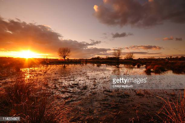 Sunset over marshland