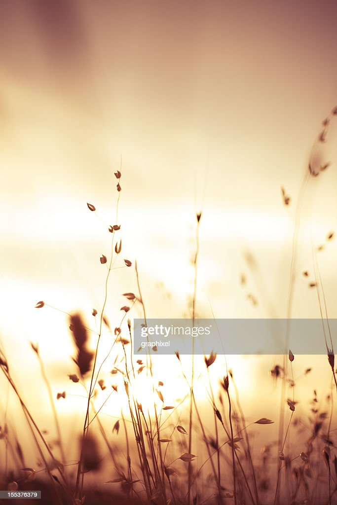 Sunset over meadow : Stock Photo